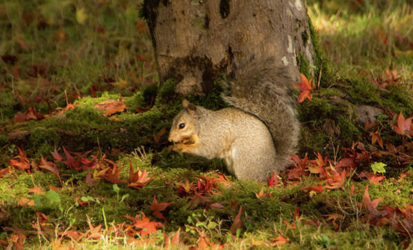 Photograph - Squirrel In Autumn by Marilyn Wilson