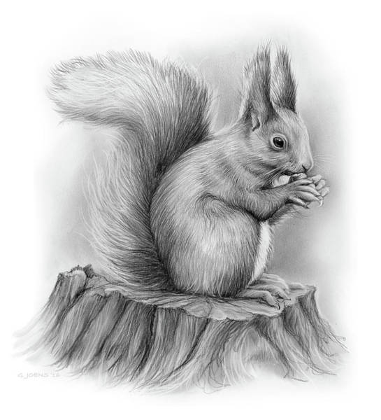 Pencil Drawing - Squirrel by Greg Joens