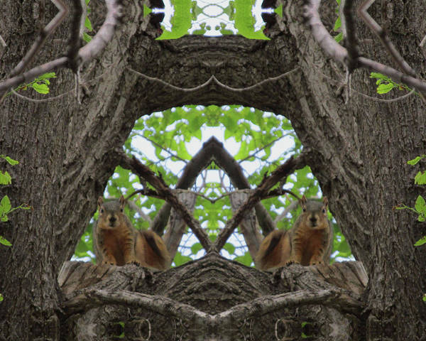 Squirrel Guardians Of The Doorway To A Green World Art Print