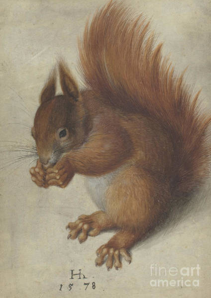 Red Squirrel Wall Art - Painting - Squirrel by Hans Hoffmann