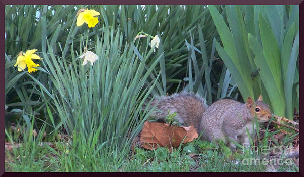 Photograph - Squirrel In The Flowers by Charles Robinson