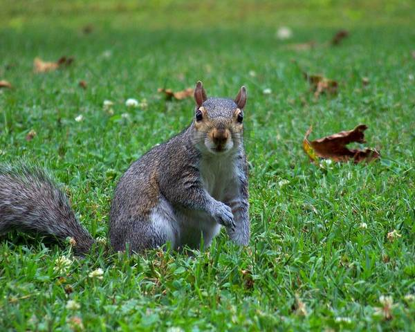 Photograph - Squirrel Iv by Jai Johnson