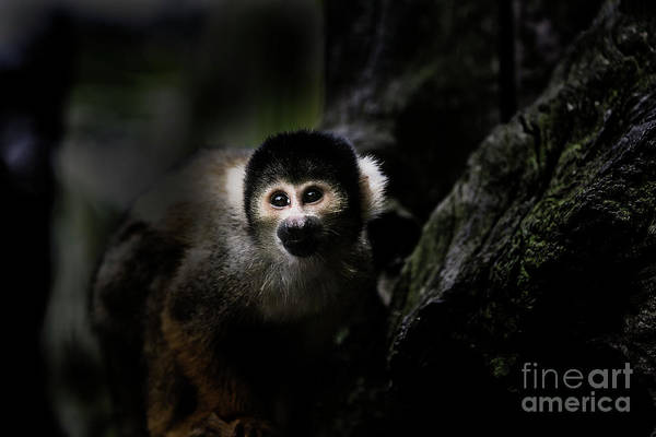 Squirrel Monkey Wall Art - Photograph - Squirrel Monkey by Sheila Smart Fine Art Photography