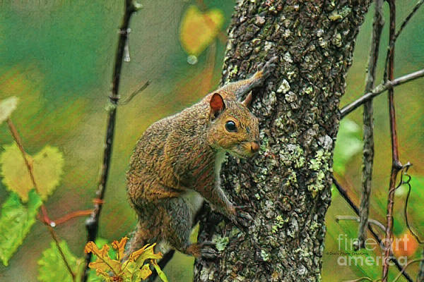 Painting - Squirrel Natural Painterly by Deborah Benoit