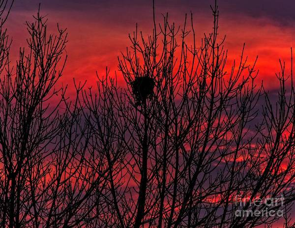 Photograph - Squirrel Nest by Jon Burch Photography