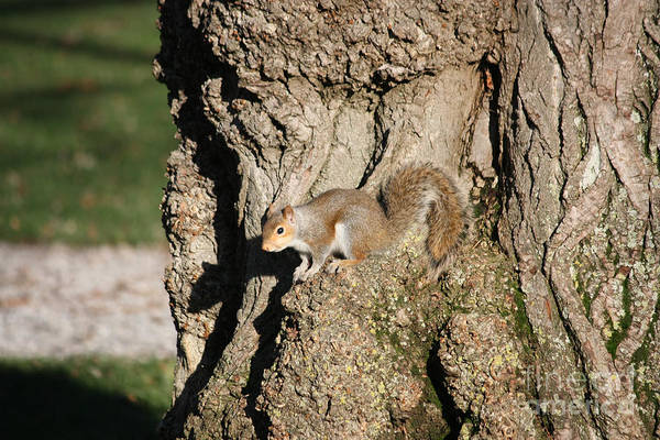 Wall Art - Photograph - Squirrel Perch by James E Weaver