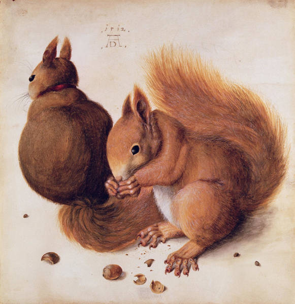 Painting - Squirrels by Albrecht Durer
