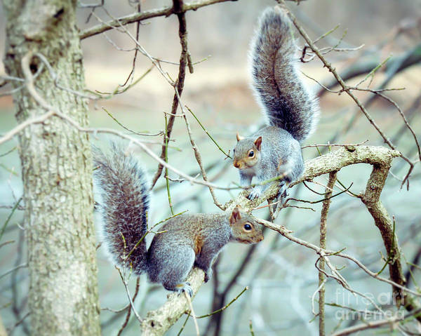 Radford Photograph - Squirrels At Bisset Park - Radford Virginia  by Kerri Farley