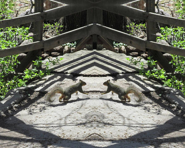 Squirrels Dancing On A Bridge Art Print