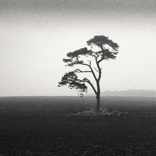 Wall Art - Photograph - St Cyrus Tree by Dave Bowman