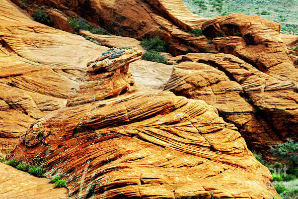 Photograph - St George Desert by David Millenheft