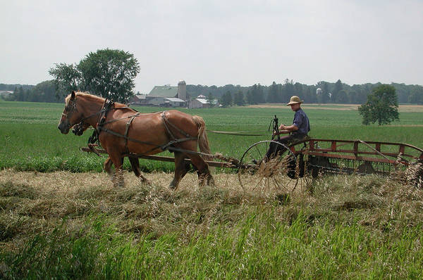 Photograph - St. Jacobs Farmer 2 by Kathi Shotwell