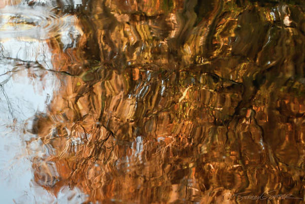 Photograph - St. Johns Reflection I by Stacey Sather