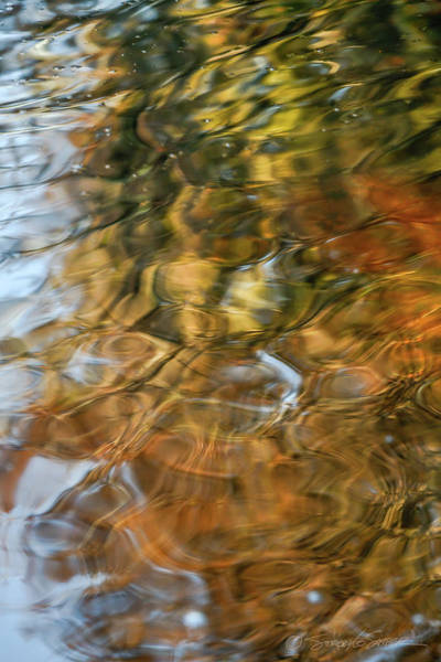 Photograph - St. Johns Reflection II by Stacey Sather