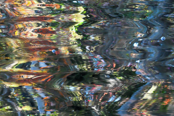 Photograph - St. Johns Reflection V by Stacey Sather