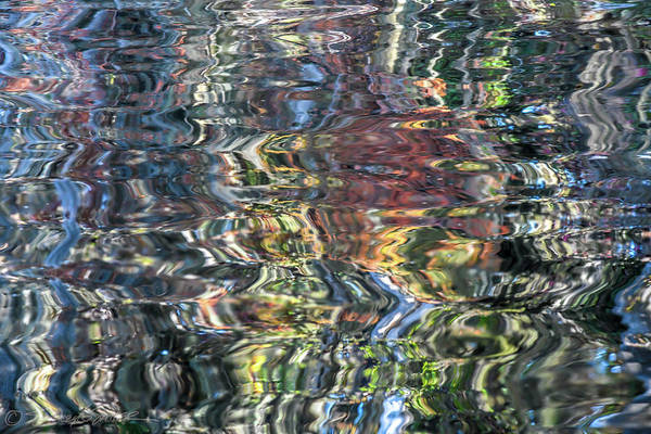 Photograph - St. Johns Reflection Vi by Stacey Sather