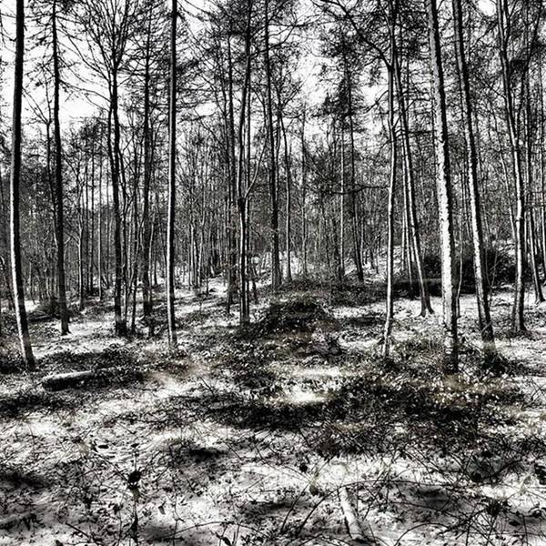 View Wall Art - Photograph - St Lawrence's Wood, Hartshill Hayes by John Edwards