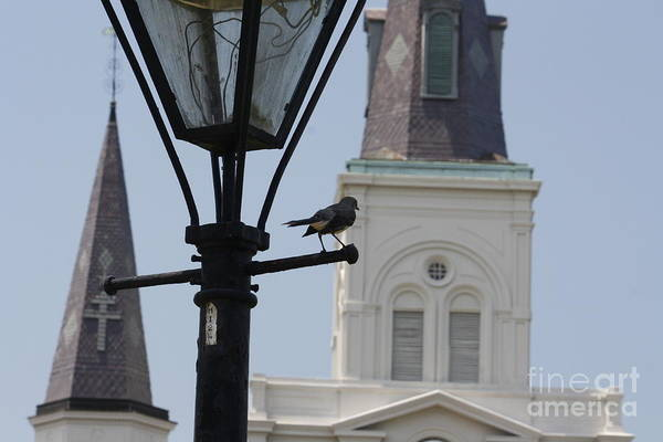 Photograph - St. Louis Cathedral by Wilko Van de Kamp