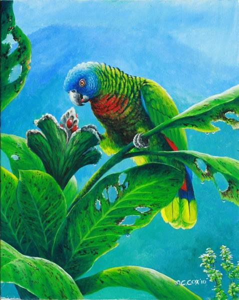 Painting - St. Lucia Parrot And Bwa Pain Marron by Christopher Cox