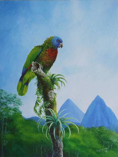 Painting - St. Lucia Parrot And Pitons by Christopher Cox