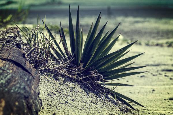 Photograph - St. Simons Beach Palms by Chris Bordeleau