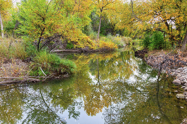 Photograph - St Vrain Tranquility by James BO Insogna