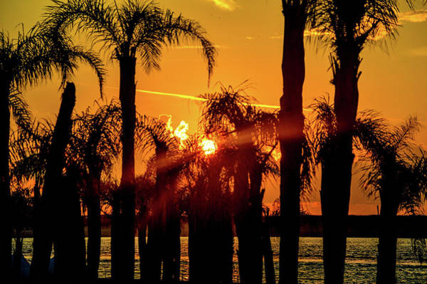 Photograph - Stack Of Palms In A Orange Sky by Michael Thomas