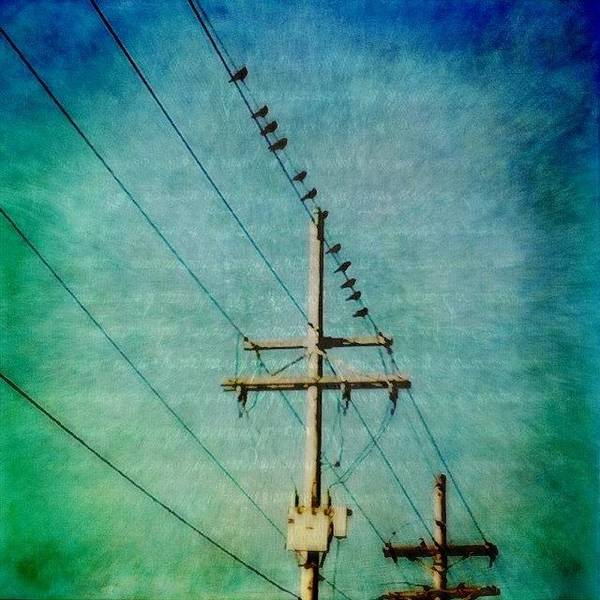 Power Wall Art - Photograph - Birds On A Line by Joan McCool
