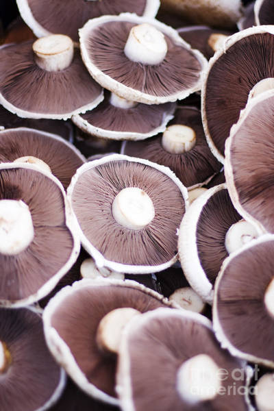 Photograph - Stacked Mushrooms by Jorgo Photography - Wall Art Gallery