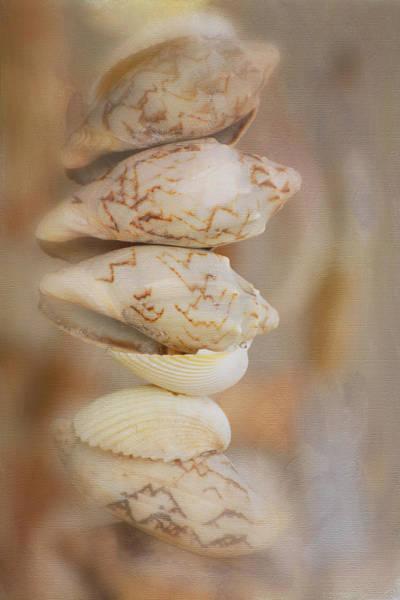 Photograph - Stacked Shells by Fraida Gutovich