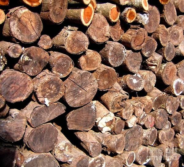 Stacked Tree Logs Art Print