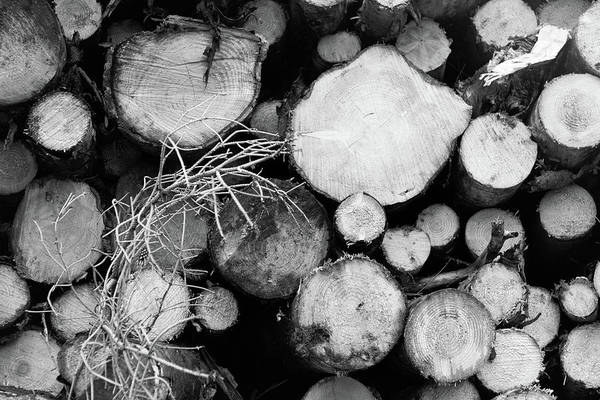 Wall Art - Photograph - Stacked Wood Logs In Black And White by Iordanis Pallikaras