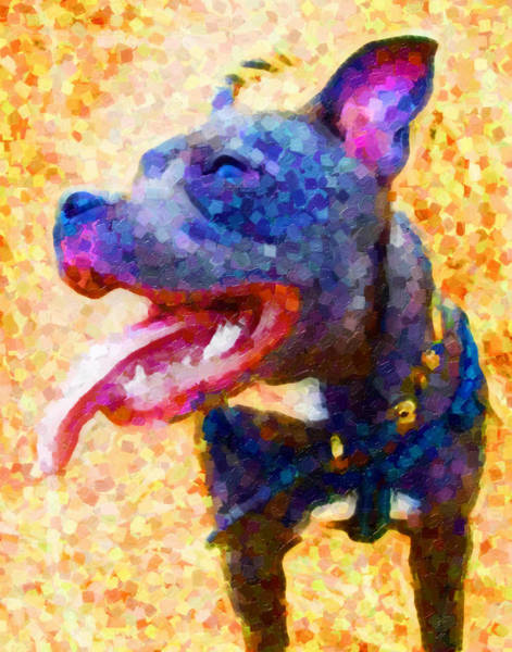 Staffordshire Wall Art - Painting - Staffordshire Bull Terrier In Oil by Michael Tompsett