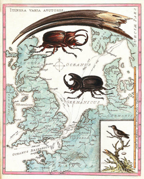 Photograph - Stag Beetles Crawling Over Map, 18th by Wellcome Images