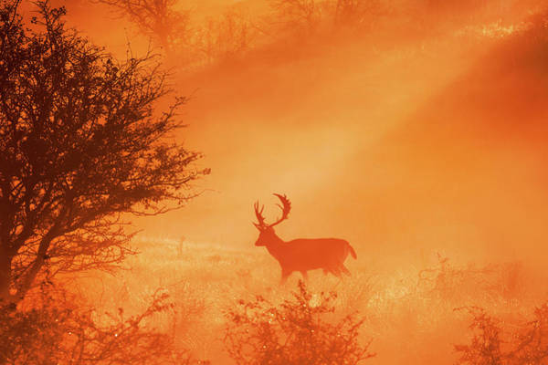 Wall Art - Photograph - Stag On Stage by Roeselien Raimond