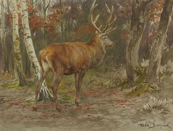 Stag On The Watch Art Print