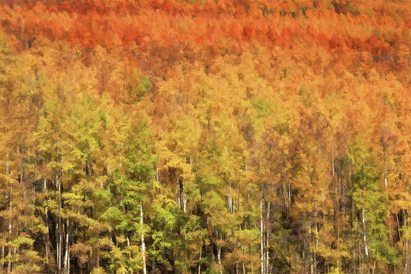 Wall Art - Photograph - Stages Of Color In An Aspen Grove by Donna Kennedy