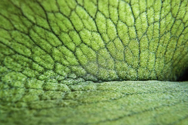 Staghorn Fern Photograph - Staghorn Macro by Thomas Morris