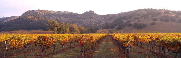 Wall Art - Photograph - Stags Leap Wine Cellars Napa by Panoramic Images