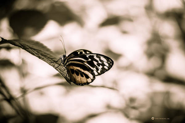 Photograph - Stained Glass Butterfly by Teresa Blanton