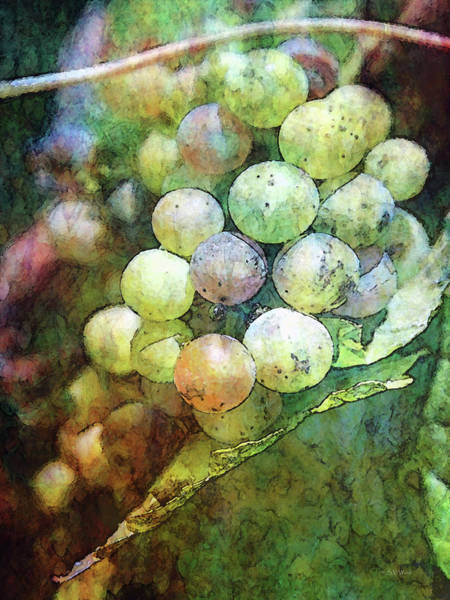 Photograph - Stained Glass Grapes 2756 Idp_2 by Steven Ward