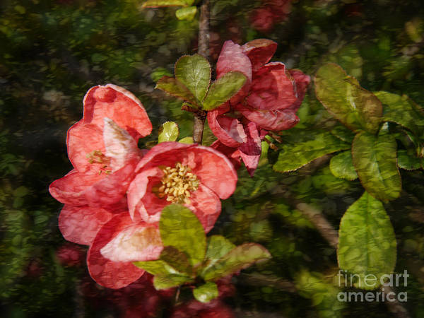 Photograph - Stained Glass Quince by Brenda Kean