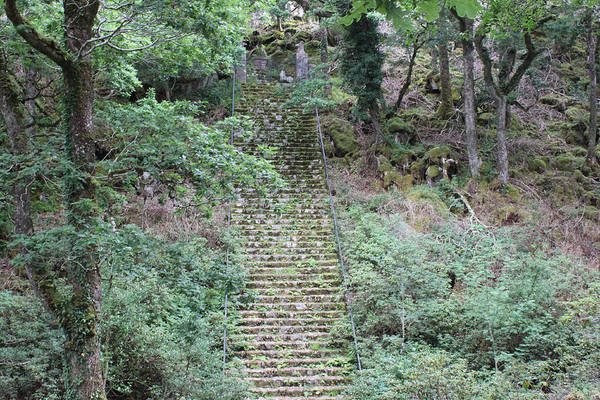 Photograph - Stairway 4315 by John Moyer