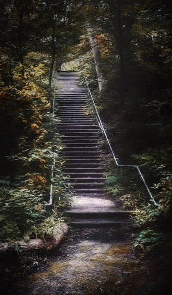 Canopy Photograph - Stairway by Scott Norris