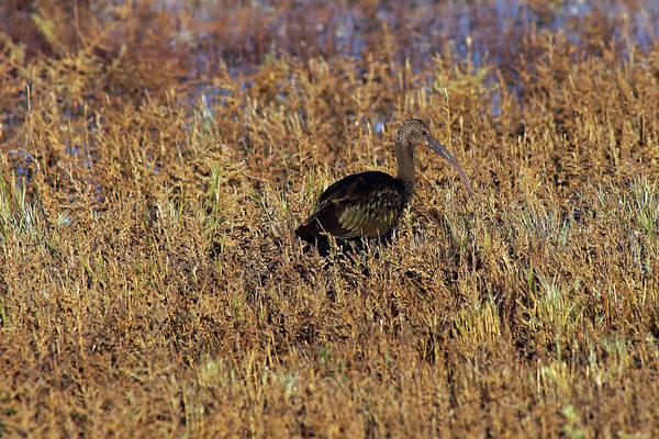 Photograph - Stalking by Leda Robertson
