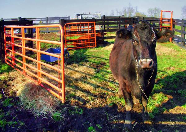 Photograph - Stalled Cow by Sam Davis Johnson
