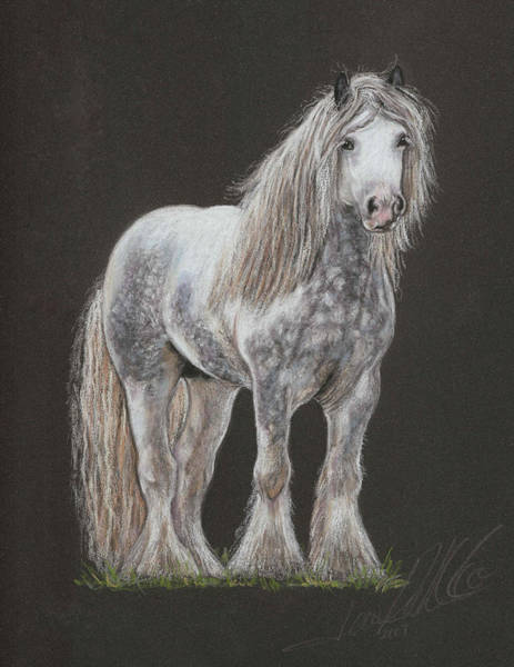 Pastel - Stallion Dunbroody by Terry Kirkland Cook