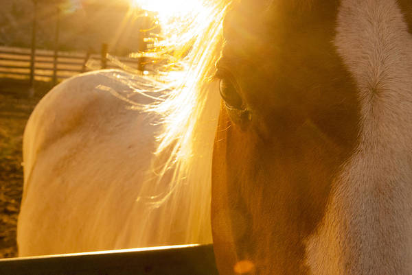 James Craddock Photograph - Stallion Fire by James Craddock