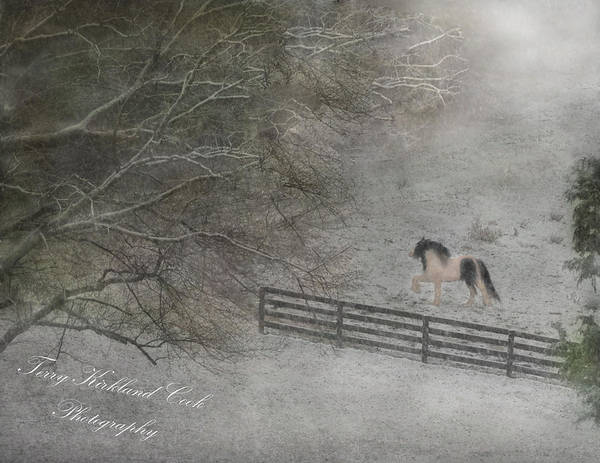 Photograph - Stallion In The Snow by Terry Kirkland Cook