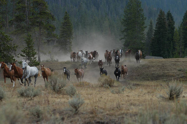 Photograph - Stampede by Jody Lovejoy